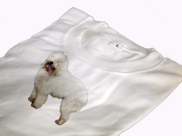 Komondor képes póló