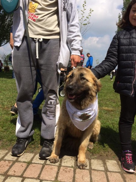 Leonbergi kutyakendő