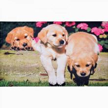 Labrador kutyakölykös lábtörlő