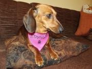 rózsaszín egyedi kutyakendő
