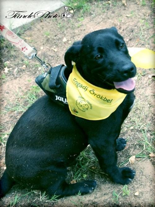 Egyedi kutyakendő a Bol-Dog.hu-tól