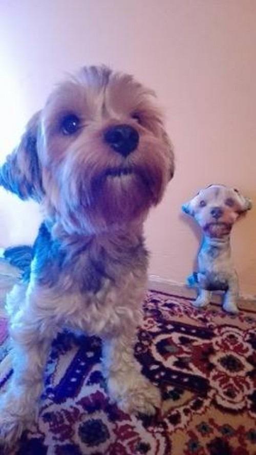 Egyedi kutya alakú díszpárna
