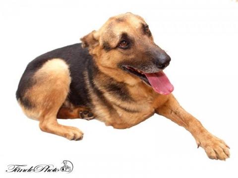 háromlábú kutya örökbefogadása