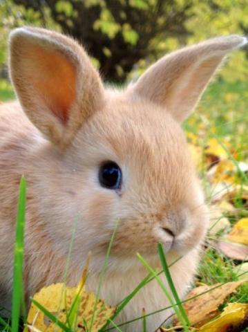 Húsvéti ünnepekre nyulat, kutyát vagy más élő állatot NE ajándékozzanak