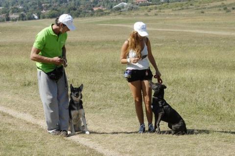 Kutyakiképzés Dogmopolite