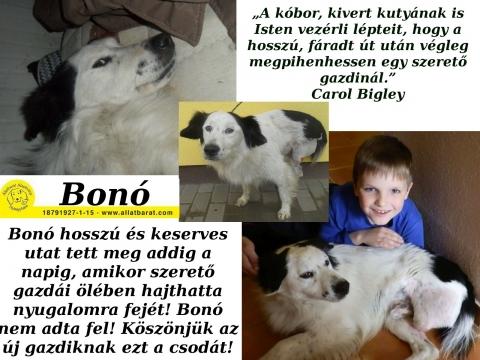 Bonó, a háromlábú kutyus megható története