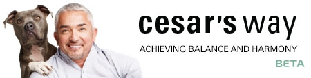Cesar Millan, bol-dog