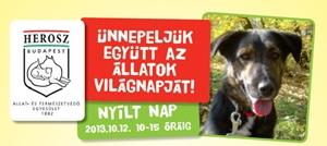 Ne vásárolj, fogadj örökbe! - Nyílt Nap a HEROSZ Budapesti Állatotthonban