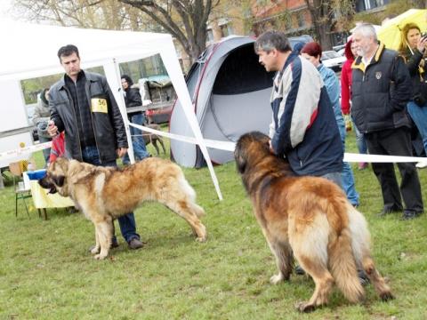 Országos CAC kutyakiállítás Nyíregyházán