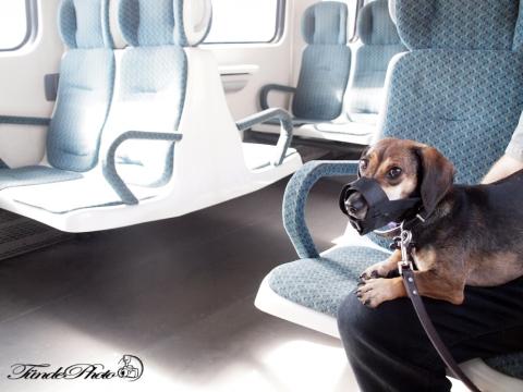 Kutyával vonaton