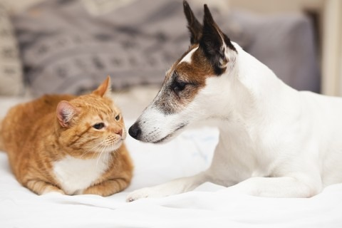 kisállat kutya macska
