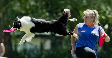 Nagy Éva Booboo nevű kutyájával a Dog Chow kutya frizbi Európa-bajnokság freestyle számában Budapesten, a Hajógyári-szigeten. MTI Fotó: Illyés Tibor