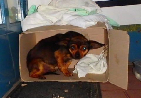 Augusztus 16. - A hontalan állatok világnapja