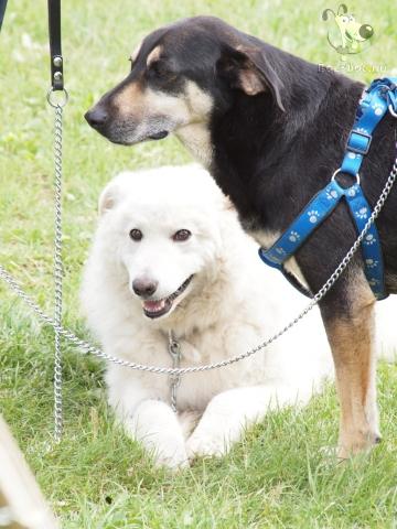 kutya szerelem