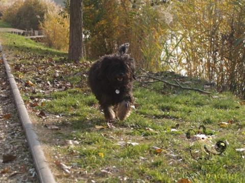 futás sportolás kutyával