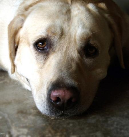 kutya, eb, okos, bol-dog.hu