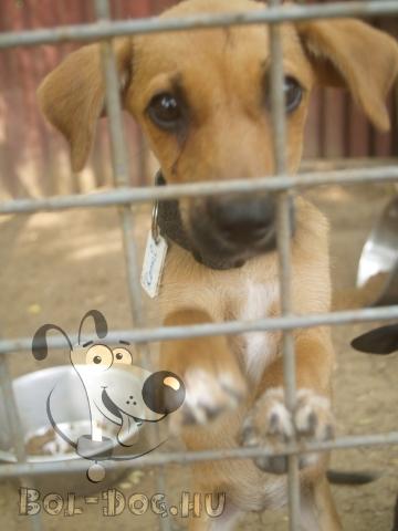 menhelyen élő kutya
