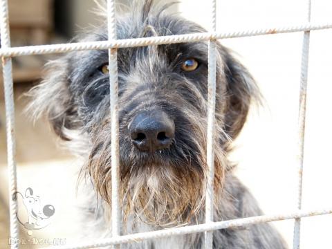 Egyedülálló program indult a menhelyi kutyák ivartalanításáért Magyarországon