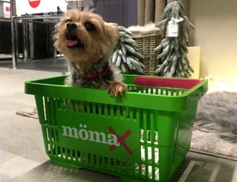 MÖmax kutyabarát