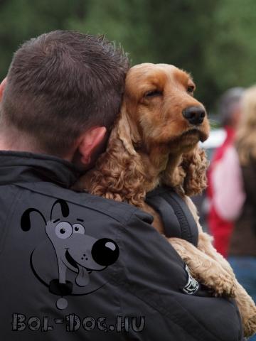 kutya, érzelem