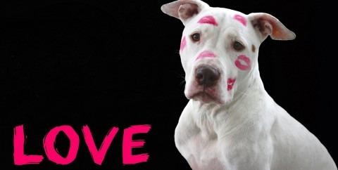 Kutya valentin nap szerelem